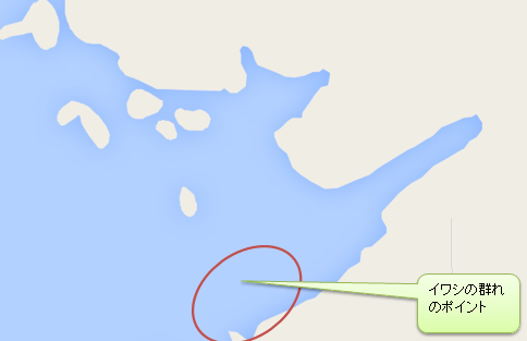 荒崎海岸のイワシの群れのポイント
