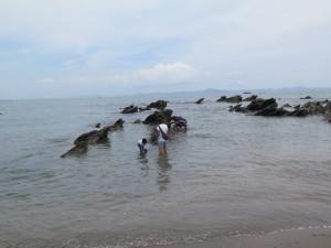 三浦海岸の岩場の近く