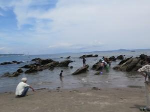 三浦海岸で磯遊び
