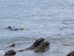 三浦海岸でシュノーケリングしてた親子