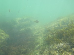 三浦海岸の岩場の様子