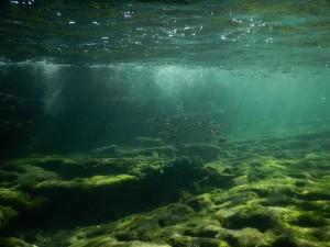 沖ノ島の海の中