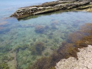 沖ノ島プライベートビーチみなたいな
