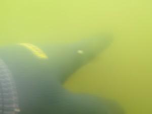 葛西臨海公園の海水